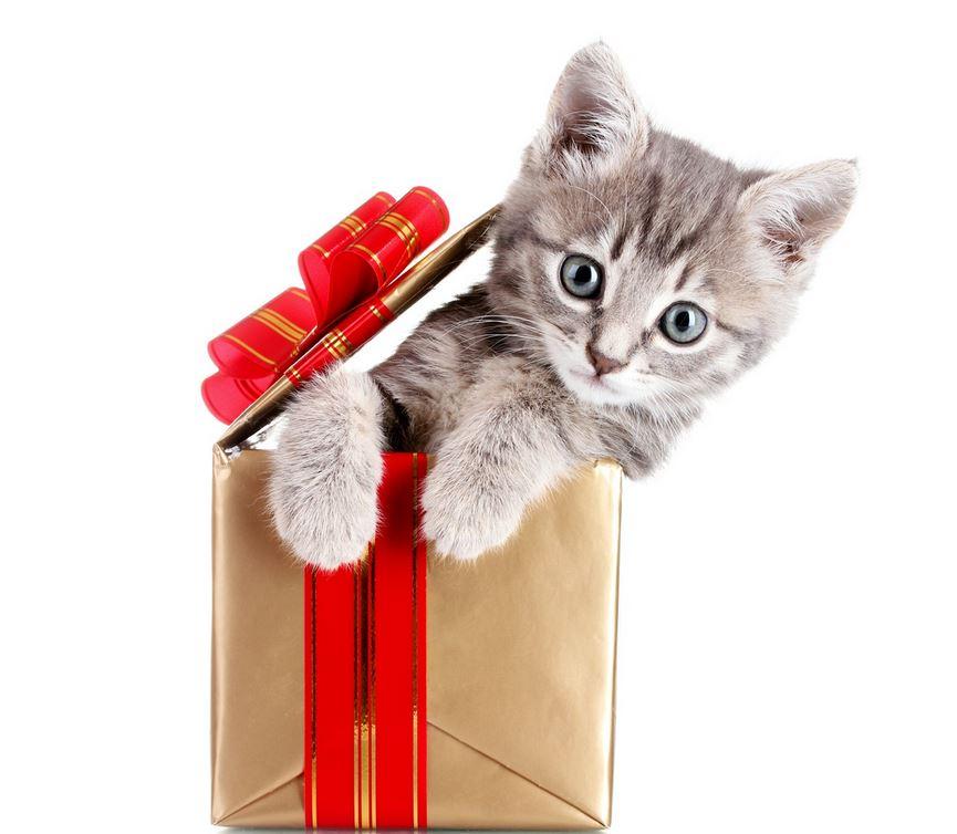lolchat f te son premier anniversaire avec de nombreux cadeaux pour vous lol chat images. Black Bedroom Furniture Sets. Home Design Ideas