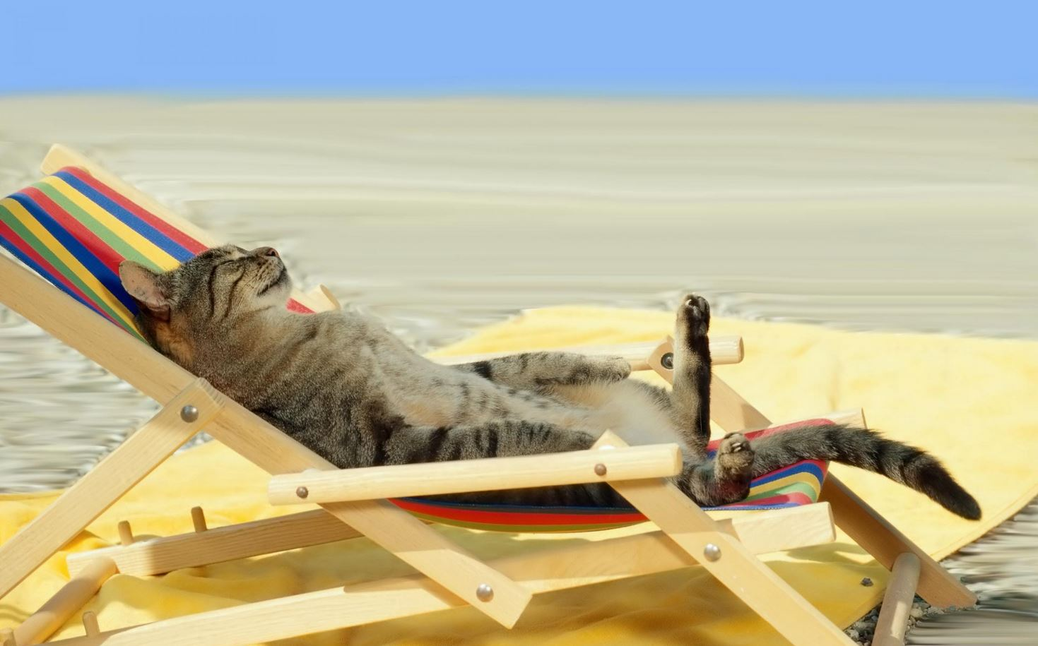 Le chat qui dort dans un transat au soleil