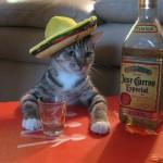 Le chat mexicain qui boit de la tequila pour l'apéro !