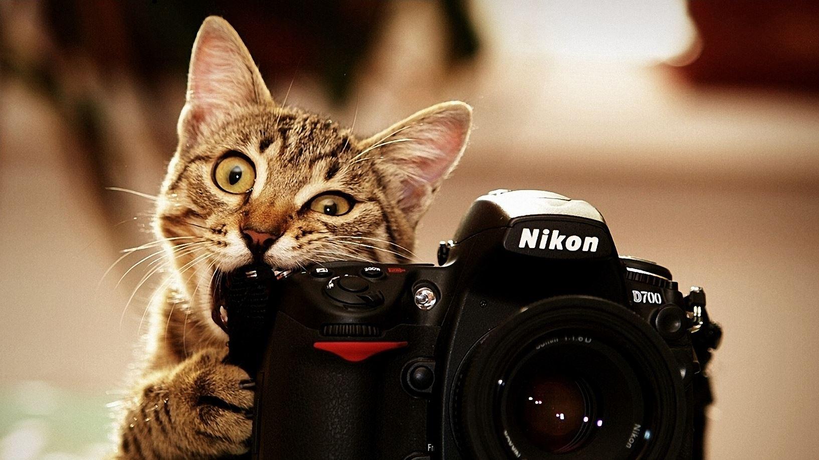 Le chat qui mort dans un appareil photo Nikon