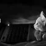 Le chaton geek