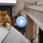 Vidéo du chat sur une voiture enneigée qui manque son saut