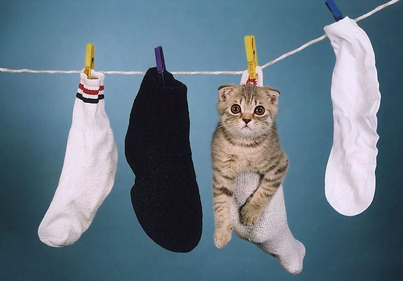 Le chat dans une chaussette accroché à une corde à linge