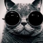 Le chat avec des lunettes de soleil
