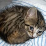 le chaton en boule trop chou