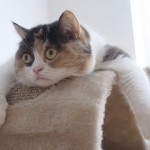 Chat affalé