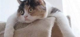 Le chat complètement affalé !