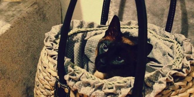 Le beau chat dans un panier