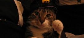 Chat déguisé pour Halloween
