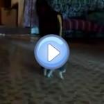 chat-effraye-balle