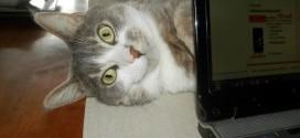 Le chat caché derrière un ordinateur et qui joue à cache cache….
