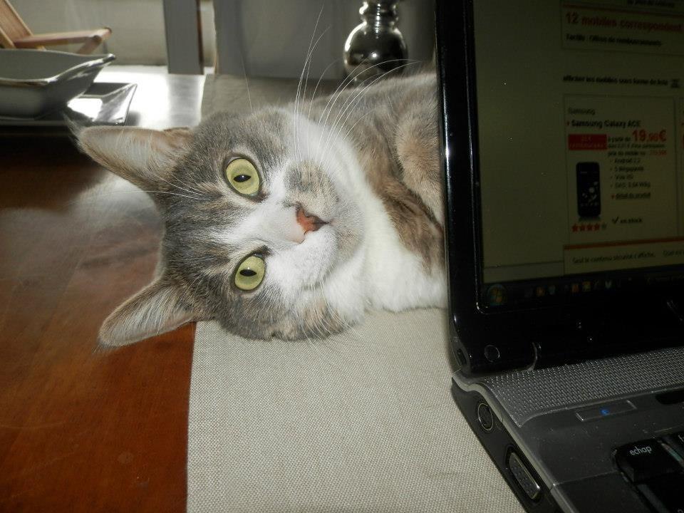chat-cache-cache-ordinateur