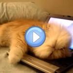 chat-ordinateur-dors