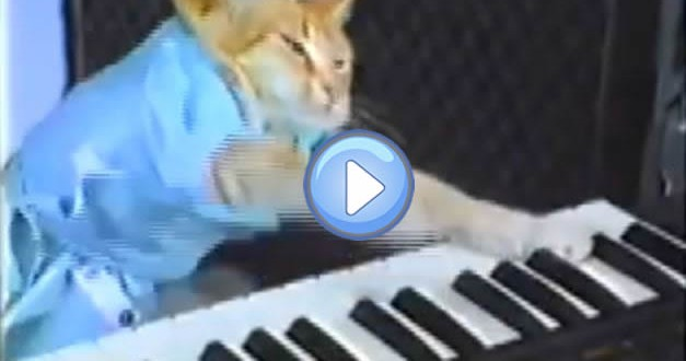 Le Keyboard Cat : l'original !