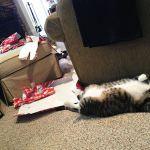 Le chat qui a déchiré tout le papier cadeau