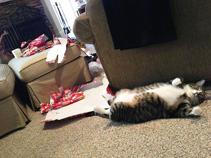 Très Le chat qui a déchiré tout le papier cadeau - Lol Chat - Images  LP19