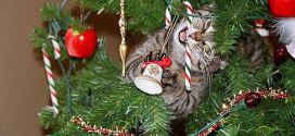 Le chat qui machouille les décorations du sapin