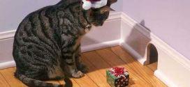 le chaton mignon qui se l che lol chat images photos et vid os de lolcats. Black Bedroom Furniture Sets. Home Design Ideas