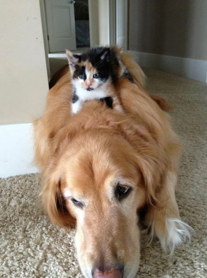 chaton assis sur un chien