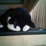 Chat dépité