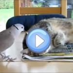 un oiseau empêche un chat de dormir