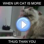 Un chat filou fait le nettoyage sur la table basse
