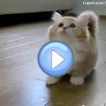chaton tout mignon qui joue