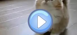 Un chaton trop mignon !