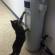 Un chat assoiffé