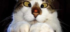 Un chat louche à cause d'une coccinelle