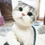 Chat à grosse tête trop mignon