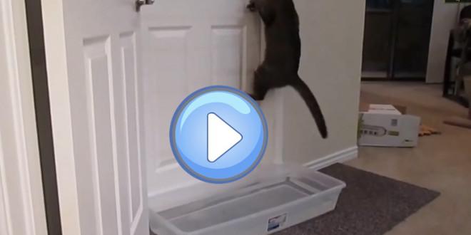 Ce chat ouvre toutes les portes !