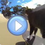 un chat qui fait du skate