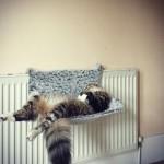 Trop dure la vie de chat