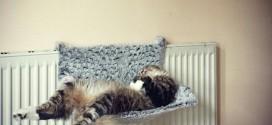 Trop dure la vie de chat !