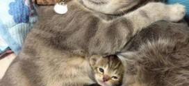 Une famille de chats