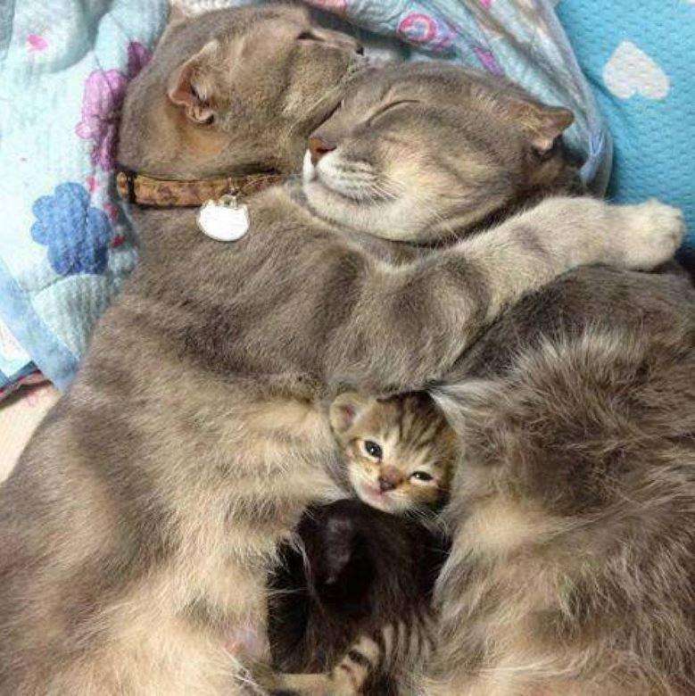 famille de chats