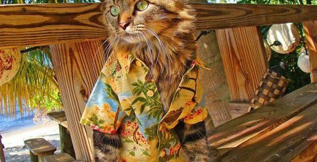 Chat en chemise hawaienne