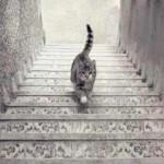 Ce chat monte-t-il ou descend-t-il les escaliers ?