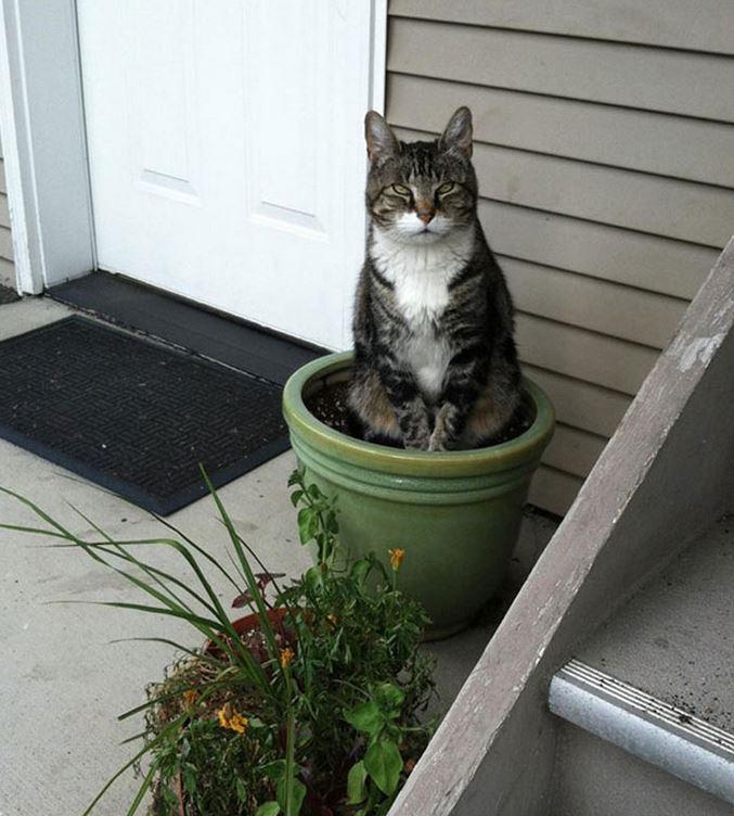 Plante chere for Plante yucca chat