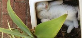 Chaton dormant dans un pot de fleur