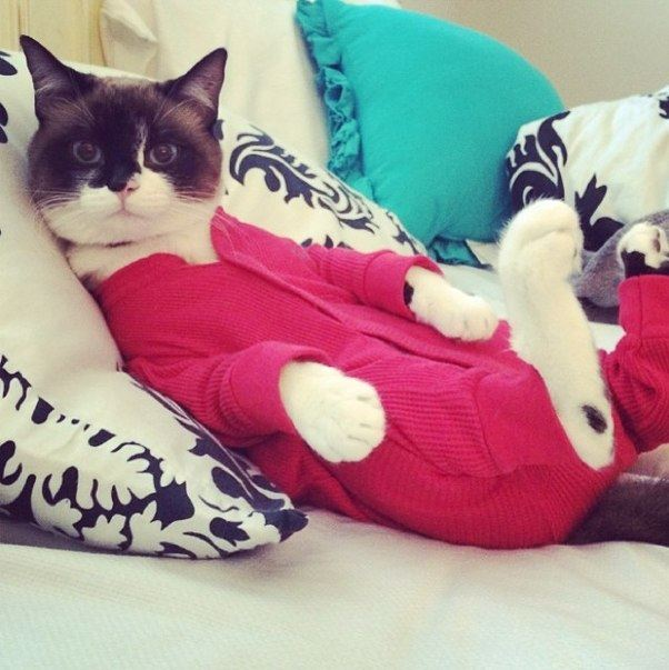 chat en pyjama