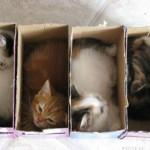 des chatons bien rangés dans des boites