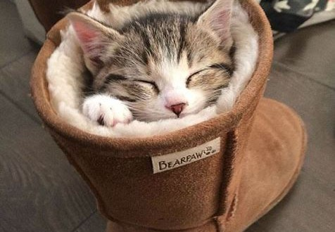 Un chaton fait un somme dans une botte fourrée