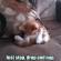 Un chaton fait sa sieste … n'importe où !