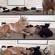 Une chèvre passe inaperçue au milieu des chats