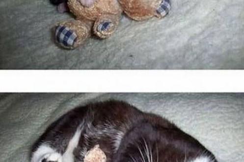 Un chat et son doudou
