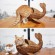 Poisson chat !