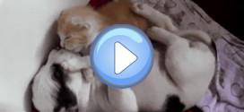 Câlin entre chat et chien