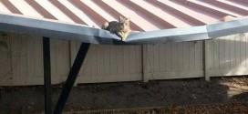 Un chat bien courageux (ou inconscient…)